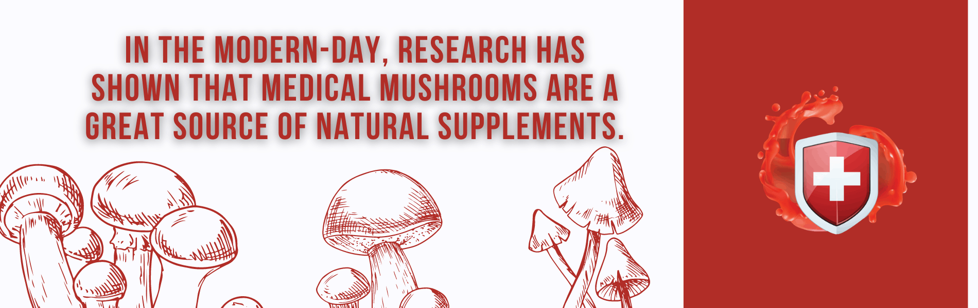 Taking Medicinal Mushrooms with Immune Support Superfoods
